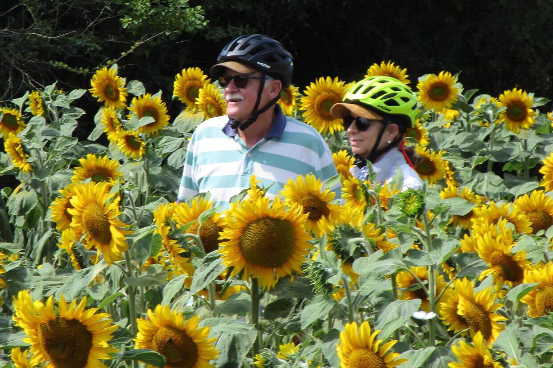 Gasten Fleur tussen de zonnebloemen
